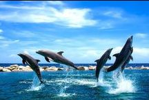 ocean life / by Jennifer Wagg