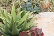 Garden Succulents / by Carole S