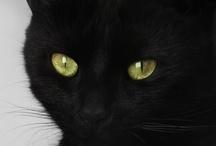 Cat / Minimiez