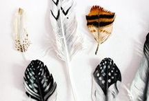 Plumes/Feathers