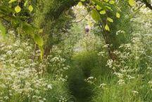 Walking Through A Field of Flowers / by Jana Harman
