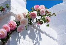 Greece & Culture/Ελλάδα & Πολιτισμός / by Konstantina