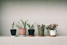 growing a garden / by kelsey lee