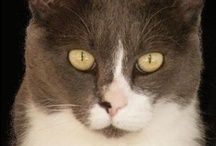 Cats possess me! / their eyes, their moves, their mood ...they always captivate me!