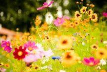 Home & Garden Love