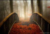 Autumn  / by Kathy Kaysen Oaks
