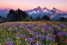 Spring Fever / Some inspiration for your springtime adventures.