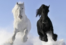 Animal Pictures I Like