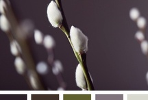 { catkin color } / by Design Seeds