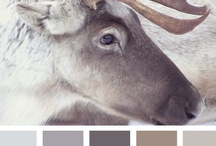 { reindeer tones } / by design seeds