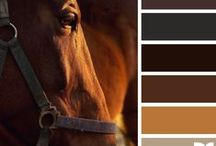 { horse hues } / by Design Seeds