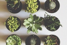 Succulents & Such