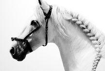 braids / by chrissy hoffmann
