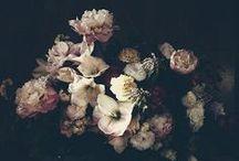A Dark Beauty / by Abi Poole