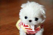 cuteness / by Jessie Callahan