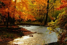 Autumn / by Tami Robinson