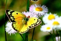 Flowers and Butterflies / by Tami Robinson