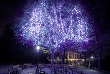 50 Shades of Purple / #purple #lavendar #amethyst #plum #violet #lilace / by Gabrielle Ann