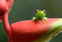 Animals | Fantastic Frogs & Lizards / #frogs #lizards / by Gabrielle Ann
