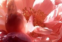 50 Shades of Peach / #peach / by Gabrielle Ann