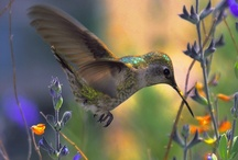 Animals | Birds' Nest / #birds #hummingbirds / by Gabrielle Ann