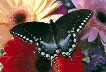 Animals | Butterflies & Ladybugs / #butterflies #ladybugs / by Gabrielle Ann