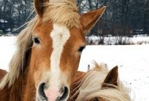 Animals | The Farm / #farm #cow #sheep #goat #horse / by Gabrielle Ann