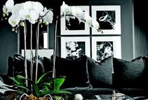 All Things Black & White / #blackwhite #blackandwhite / by Gabrielle Ann
