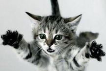 cat / by Tetsuya Ito