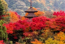Autumn leaves / by Tetsuya Ito