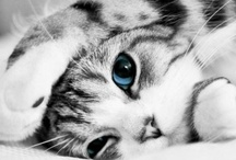 Cats and others  / sooo cute