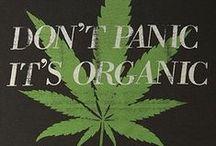 Cannabis / by Christan Rogge