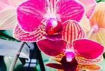 Orchids / by Brie Genovese