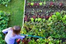 Gardening, homesteading and things.