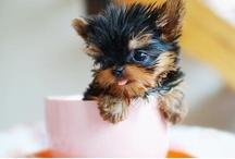 Cup o' Cuties