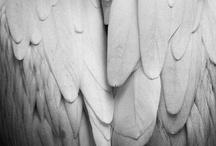 Angel Whispers  / Sharing Angel Love