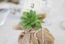 Eco-friendly / Unique eco-friendly wedding ideas