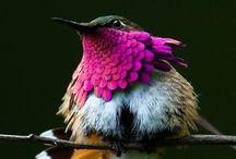 Science & Nature / by Jenny Berwick