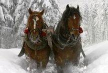 winter whispers / by sentimentaljunkie