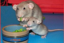 More Peas Please / by Sylvie Hahto Boback