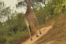 Afri Travel / Travelling around South Africa