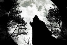 The Moon / by Tonja Green