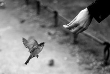 Birdy / by Cate Cate