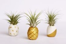 Fruit Decor / Fruit inspired home decor, furniture & decorating ideas!