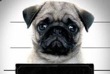 Eu ♥ Animais / Amigo para todas as horas. Se você tem um cãozinho nunca se sentirá sozinho. Encontre aqui informações para o seu amigão. ♥
