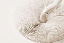 """mushroom, mushroom"""""""
