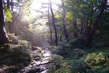 ✨Gaïa's Landscapes✨ / Wonderful Landscapes & Wild Places