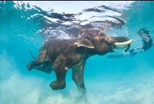 elephants / by Goretti Malayil