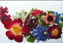 British dried flowers / Daisy Gifts Ltd support British growers and have a wide range of dried flower bunches, pressed flowers and dried petals / by Ruth at DaisyShop.co.uk