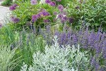Lovely Plants / Gardening. Perennials, flowers, annuals, cottage garden, garden design,